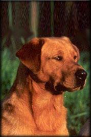 Top Dog Kennels Hambrook